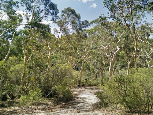 Path to Stingray Swamp