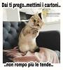 #link #divertenti #love #cat #Tiziana #Mosso https://www.facebook.com/MossoTiziana/ #frasi #buongiorno #buon #pomeriggio #buona #serata #buonasera #buonanotte #page #facebook #Tizi (tizianamosso) Tags: divertenti tiziana link frasi pomeriggio facebook serata tizi buonasera mosso love buonanotte buona buongiorno buon page cat