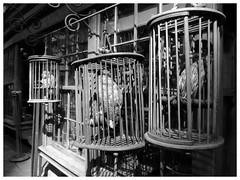 diagon alley birds (downhamdave) Tags: wooden cage birds diagon alley harry potter studio tour mono black white monochrome fuji fujifilm x30 elements 13
