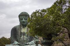 Kamakura Daibutsu (calum.hale) Tags: 日本 japan 鎌倉 kamakura daibutsu tree foliage statue bronze