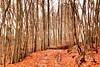 orange forest (ronjamosquito) Tags: bunt blätter laub herbst autumn orange wald forest