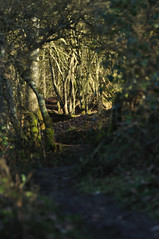 Forests trail (N'GOMAPHOTOGRAPHY) Tags: birds nature robin jay woodpecker shovler duck goldeneye tufty woods nuthatch rabbit coventry warwickshire