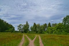 A great M (МирославСтаменов) Tags: russia moscowregion byroad fork meadow copse edge cloudscape sky greenery summer forest