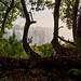 Tree at Victoria Falls