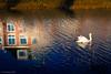 ripples (soundmoods) Tags: swan sun shadow thenetherlands bird reflection ripple house mood wintersun