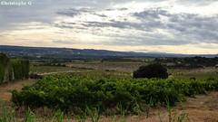 Châteauneuf du pape, vue sur un grand vignoble (Vaucluse - 9 septembre 2017) (Patrimoines du Sud de la France) Tags: châteauneufdupape vin nature vaucluse provence