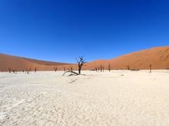 P1030291 (dieter.schultheiss) Tags: namibia naankuse lodge erindi game sossusvlei swakopmund safari cheetah lion gepard oryx dunes elephant elefant wild dog wildhund gnu zebra crocodile krokodil san bushmen buschmänner dead vlei solitaire