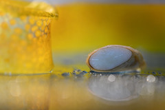 Apeeling Pip (setoboonhong) Tags: macro monday theme citrus rind orange peeling pip cut longitudinally water droplets mirror incandescent light led blue plastic bag depth field blur bokeh yellow white husk kernel