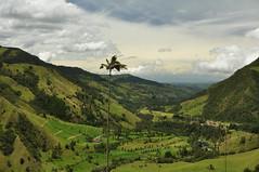 Cocora Valley (Wolfgang Kalb) Tags: cocoravalley salento colombia southamerica südamerika kolumbien waxpalms waxpalm