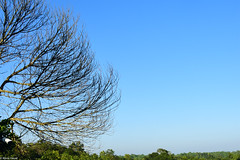 Stratosphere. (abrarhayat) Tags: blue skyline sky skies nature couleur vert green natureshooters naturephotography withered tree trees beautiful peaceful peace serenity serene landscape picturesque nikonphotography nikkor travelgram travel travelphotography hills sylhet bangladesh