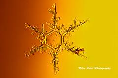 IMG_3052 (nitinpatel2) Tags: snowflakes winter snow macro crystal nature nitinpatel