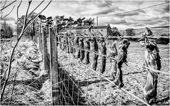 Mickleton . (wayman2011) Tags: f2 fujifilmxf18mm lightroomfujifilmxt10 wayman2011 bw mono rural countryside moles molecatcher pennines dales teesdale mickleton countydurham uk