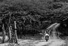 Nas estradas de terra (felipe sahd) Tags: estradasdeterra zonarural pedrabranca ceará brasil sertãodesenadorpompeu caatinga semiárido moto mulher pessoas 123bw noiretblanc