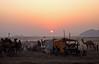 Rajasthan - La foire aux chameaux de Pushkar au crépuscule. (Gilles Daligand) Tags: pushkar rajasthan inde india foire chameaux camels fair crépuscule dusk panasonic tz7