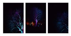 BRUSSELS 24 02 2018 MAGIC TREES (Spaceopera) Tags: brussels bruselles brussel bright light lumiere night nuit street nikon nikond610