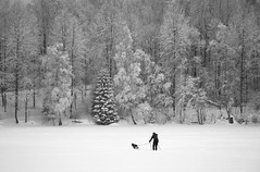 Into the Woods (bjorbrei) Tags: winter snow frost ice shore wood forest trees skiing dog maridalsvannet lakemaridal kjelsås oslo norway