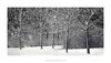 Five (Amar Sood) Tags: amarsoodphotocom amarsoodphotography nikon d800e d800 landscape intimatelandscape longlenslandscape blackandwhite whiteandblack mono monochrome trees snow tamron150600 tamron