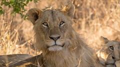 Nairobi-Nationalpark-0404 (ovg2012) Tags: kenia kenya nairobi nairobinationalpark