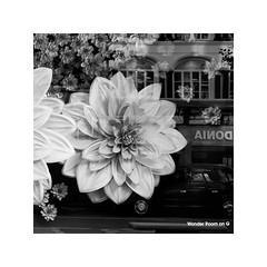 selfridges, uk (schan-photography.com) Tags: fujifilmxt1 xf23mmf14r monochrome bw blackandwhite street streetphotography windowdisplay flower bus taxi london fujifilm xt1 23mm f14 square
