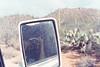 Saguaro NP (wrenee.com) Tags: 2017 35mm 800 film canonae1 cinestill800t december saguaro tucson arizona saguaronationalpark desert 800t cinestill westfalia vanagon vanlife pakonf135