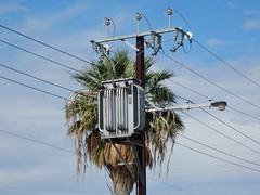 Electric Palm (mikecogh) Tags: findon palmtree transformer electricity stobiepole telegraphpole wires