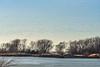 C2N_8734 (Clark Engbrecht) Tags: cheneylake kansas winter birds ice lakes nature outdoors waterfowl landscape snowgeeseflock water