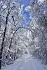 Blue (buffaloalice) Tags: minnesota snowstorm haycreek landscape creek cow barn red snowday bridges