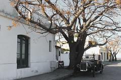 015 (Thaís Letícia Olivo) Tags: uruguai uruguay colonia coloniadelsacramento old car tree house trip travel viagem casa arvore carro velho