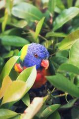 Sneaky parrot (leadin2) Tags: eos m6 canon 2017 road side wild flower green australia melbourne victoria bush parrot colors