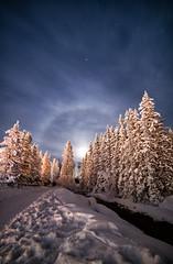A Halo for the Trees (Kristin Repsher) Tags: nightsky workshop lakelouise moonhalo alberta fullmoon banffnationalpark longexposure winter nikond750 canada banff nikon