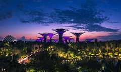 In the Beginning (benzhtan) Tags: blue city cityscape clouds dawn domes gardensbythebay morning orange outdoor singapore sky sunrise supertrees canon canoneos70d 24f14l