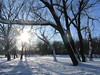 27.02.2018 (VERUSHKA4) Tags: neve neige winter hiver february vue view ville city cityscape nature sunlight sun light canon europe russia moscow season sunny sky white blue blanc outdoor tree trunk bough branch shadow shade perspective