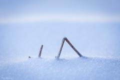 Stille im Schnee - Silence in snow (He Ro.) Tags: 2018 sauerland schnee winter stille still tranquil cold snow detail intimatelandscape germany naturparksauerlandrothaargebirge nrw nordrheinwestfalen simplicity minimalist inflickrsexplore