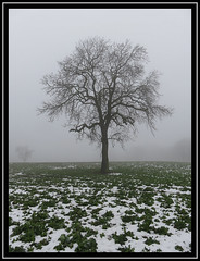 Lonely Lime Tree (M E For Bees (Was Margaret Edge The Bee Girl)) Tags: winter snow farm field limetree bare branches tree fog outdoors countyside black white cold grey canon landscape silhouette sky