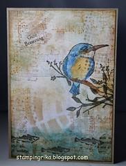IMG_4594 (stamping_rika) Tags: kingfisher ijsvogel eisvogel card stamping twinklingh2o su destempelwinkel vissen fische