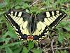 Butterfly 1564 (+1000000 views!) Tags: butterfly borboleta farfalla mariposa papillon schmetterling فراشة