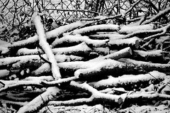 Snow on Wood (pjpink) Tags: snow snowcovered snowy snowing rvasnow rvasnow2018 weather tree branches bark blackandwhite bw monochrome ginterpark northside rva richmond virginia january 2018 winter pjpink 2catswithcameras