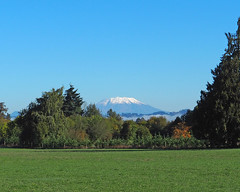 Mt St Helens (PDX Bailey) Tags: landscape mountain sky grass tree field forest blue green white snow fence fog state washington pnw west north northwest clear weather good