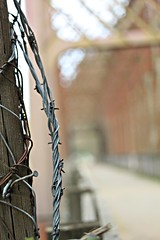 Barb Wire Bokeh (dsgetch) Tags: barbwire bokeh dof depthoffield mckenzieriver mckenzie bridge cascadia pacificnorthwest pnw pnwlife oregon willamettevalley eugene eugeneoregon coburg armitagepark armitage