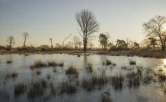 _IMG4024 (Henk de Regt) Tags: nederland veluwe ijs riet water bomen landschap the netherlands gelderland natuur nature landscape grass bos forest trees zonsopkomst sunset sundown zonsondergang swamp