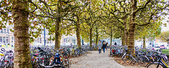 Trees and bicycles (Jan 1147) Tags: treesandbicycles bomen en fietsen trees bicycles bikes outdoor buitenopname gent belgium