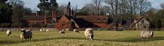 Baddesley Clinton: South-east panorama (Nick:Wood) Tags: baddesleyclinton warwickshire panorama field sheep manor manorhouse nationaltrust pasture trees