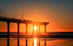 A Real Pier (ajecaldwell11) Tags: sand sunrise ankh pier water birds newbrightonpier light golden sun sea tide fishing reflection beach christchurch crab silhouette sky newzealand seagull caldwell newbrighton dawn