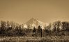 Mt Hood (Mule67) Tags: mthood mountain fern hill wetland forest grove oregon