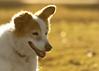 2/52 WFD Nadja (utski7) Tags: dog portrait sunset backlit evening goldenlight park