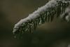 Winter (Döbröntei Photography) Tags: macro snow sigma nikon pine winter cold dark blackandwhite d7100 testpic snowing woood woodstep outside vintage lowexposure dreaming bright snowi creativ