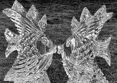 Kissing Fish Ice Sculpture (charlie_guttendorf) Tags: guttendorf heartoflewisburgicefestival nikon nikon18200mm nikond7000 art fish ice icesculpture icefest kiss kissing lewisburgpa sculpture winter