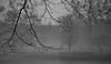 Deep in Thought (chantsign) Tags: park fog evening blackandwhite monochrome branches winter bare layers focus