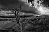 Back Road (evans.photo) Tags: mynyddbach ceredigion blaenpennal wales clouds cymru tree horizon wideangle hinterland
