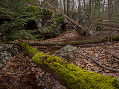 By the Two Brooks Trail (Dave Landry) Tags: winter northamerica flickr hiking westmilford newjersey places unitedstates pequannockwatershed twobrookstrail passaiccounty america us usa unitedstatesofamerica